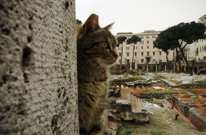 Cat-at-Largo-di-Torre-Argentina
